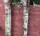 Portland Stone Columns and Arches