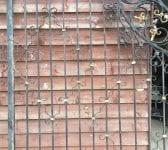 Reclaimed Regents Park Gates